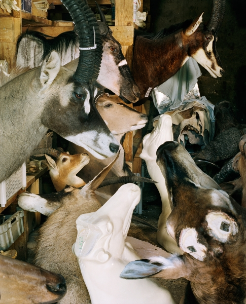 115_taxidermie005.jpg